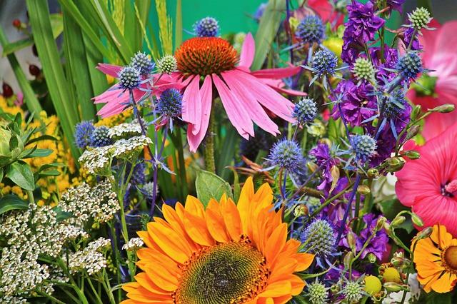 flowers-910846_640